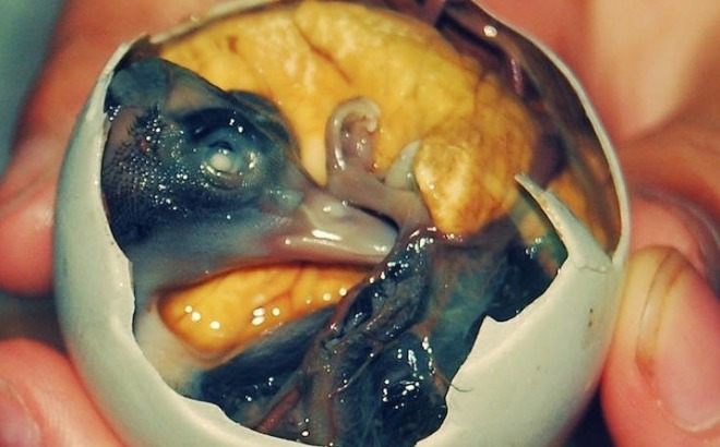 5 most shocking egg delicacies ndtv food for Why does vagina smell like fish