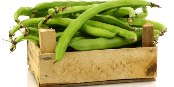 broad.bean 600.jpg