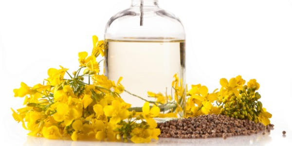 canola-oil_article.jpg