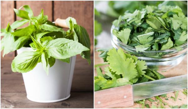 herb-article-600.jpg