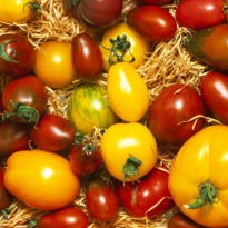 Peppers, tomatoes lower risk of Parkinson's