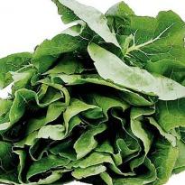 spinach_med.jpg