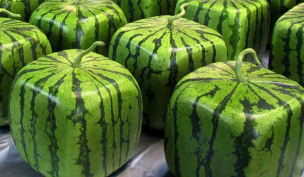 square-watermelons_article.jpg