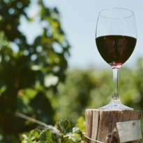 Nashik to host first grape harvest fest