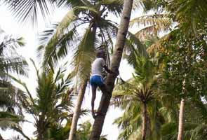 Kerala wants curbs on coconut oil export lifted