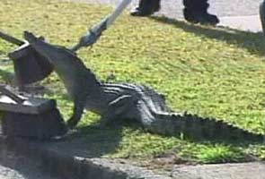 Crocodile sneaks into Australian family's living room