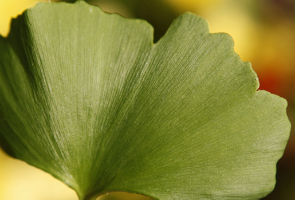 Scientists create world's first artificial leaf