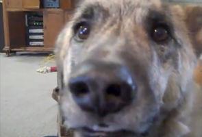 скачать бесплатно talking dog - фото 8