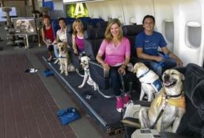 Σε στούντιο οι σκύλοι μαθαίνουν να ταξιδεύουν με αεροπλάνο...