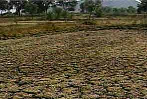 With drought looming large, government gears up with contingency plans
