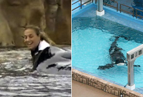 SeaWorld fined for whale trainer's death