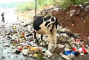 Garbage row: High Court warns Karnataka government of contempt action