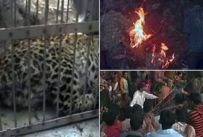Leopard burned alive in Uttarakhand