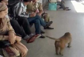 Monkey menace continues at the Jammu Medical College Hospital