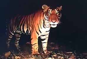 Maharashtra okays shooting tiger poachers on sight