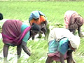 With good rainfall towards July end, Andhra Pradesh positive about Kharif