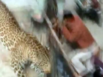 leopard_meerut360.jpg